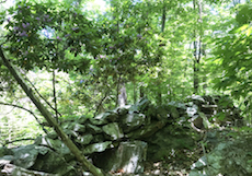 Artichoke River Woods, stone walls and woods