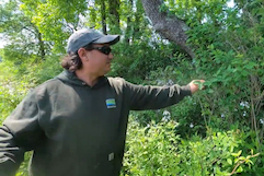 Dave McKinnon pointing out invasive plant at Cox