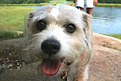 Dog at Greenbelt property