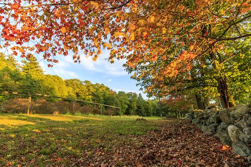 Green Meadows Farm & Vineyard Hill