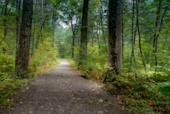Jones trail in Salisbury, boardwalk and wooded trail