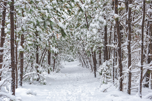 snowy winter trail at Willowdale Mill
