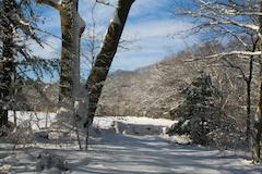 snowy, winter scenery at Julia Bird Reservation