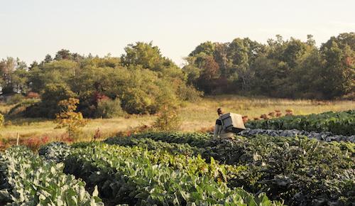 paulcgoldbergfarm