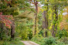 Woods at John J. Donovan Reservation