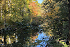 Ipswich River with brilliant fall colors at Julia Bird