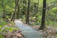 new trail at Vineyard Hill, Hamilton