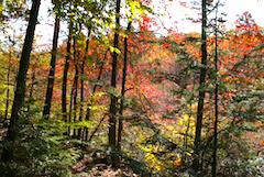 Vibrant fall foliage at Warren Weld Woodland