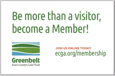Be more than a visitor, become a Member!