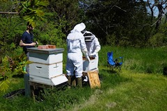 Beekeepers at cox