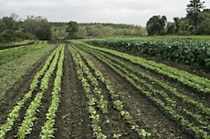 Farmland, row crops