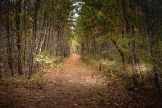 Wooded trail at Woodland Acres, Rockport